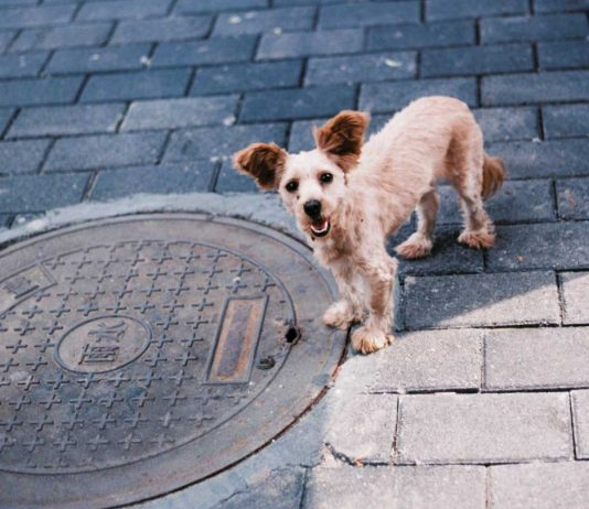 Tips-to-Prevent-Blockage-in-Commercial-Drains-on-coreinfluencer