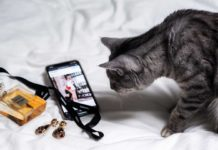 6-Factors-You-Need-To-Consider-Before-Buying-Smart-Pet-Cameras-on-coreinfluencer