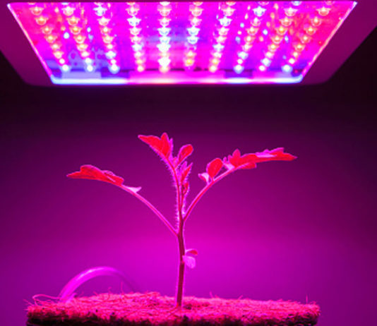 5-Types-of-Hydroponic-Lights-that-Help-Plants-Grow-Efficiently-on-coreinfluencer